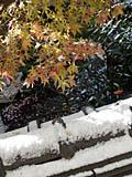 12月18日の朝 窓の外の雪