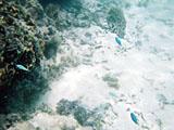 グアム:海の中
