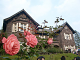 バラの季節の旧古河庭園